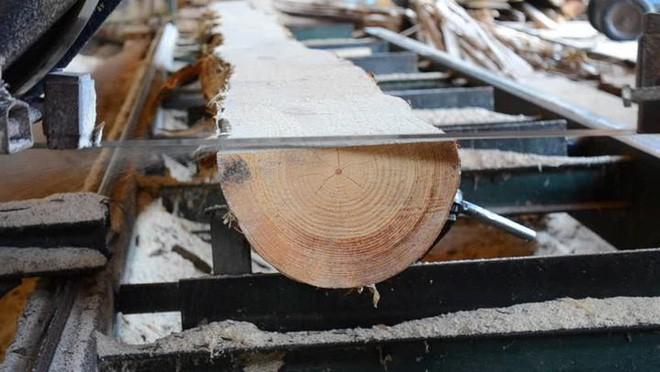 Phát hiện mùn cưa, phôi gỗ, vỏ bào… có thể giúp kết dính bê tông chắc và chống thấm tốt hơn - Ảnh 2.