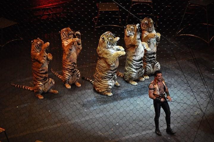 Chùm ảnh: Sự thật tàn nhẫn rớt nước mắt bên trong các rạp xiếc thú - Ảnh 12.