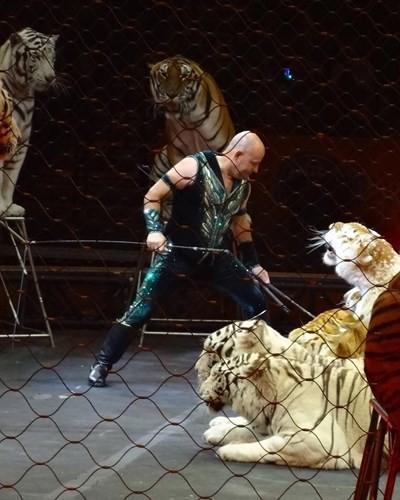 Chùm ảnh: Sự thật tàn nhẫn rớt nước mắt bên trong các rạp xiếc thú - Ảnh 4.