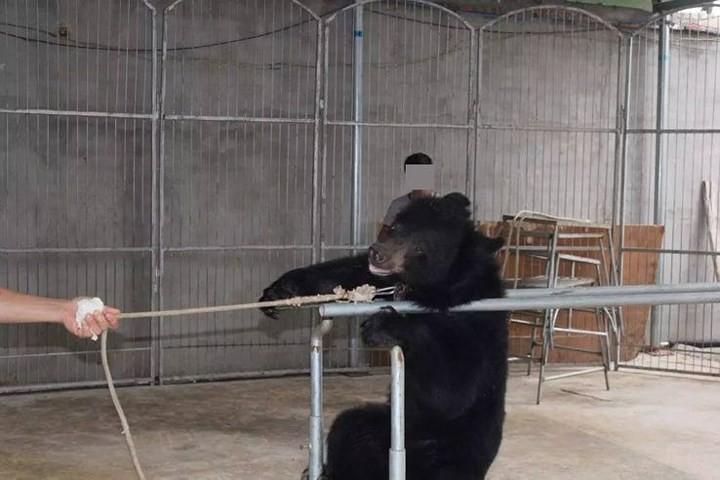 Chùm ảnh: Sự thật tàn nhẫn rớt nước mắt bên trong các rạp xiếc thú - Ảnh 7.