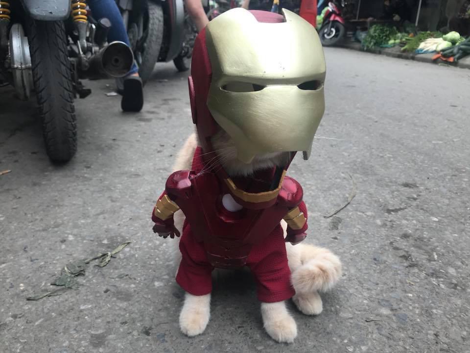 Rũ bỏ hình ảnh hoàng thượng, chú mèo tên Chó hoá thân thành anh hùng Avenger oanh tạc chợ cá Hải Phòng - Ảnh 12.