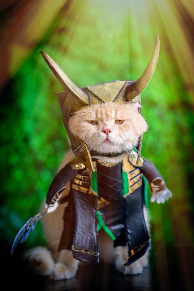 Chú mèo tên Chó lại hóa thân thành siêu anh hùng Avengers, được bạn bè Thái Lan cưng nựng, xuýt xoa hết lời - Ảnh 8.