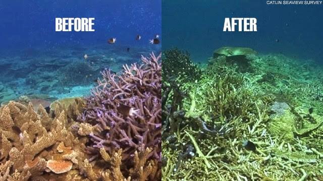 Viễn cảnh kinh hoàng nào đón đợi ta khi toàn bộ rạn san hô trên Trái đất này biến mất? - Ảnh 4.