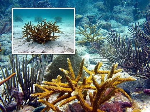 Viễn cảnh kinh hoàng nào đón đợi ta khi toàn bộ rạn san hô trên Trái đất này biến mất? - Ảnh 2.