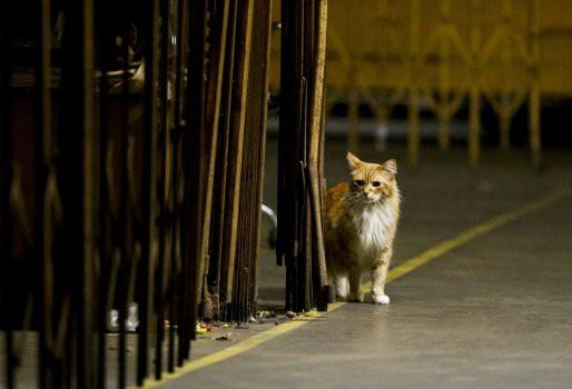 Bỏ cả nghìn đô để tìm mèo đi lạc và câu chuyện về nghề nghiệp đặc biệt chỉ có ở Nhật Bản - Ảnh 3.