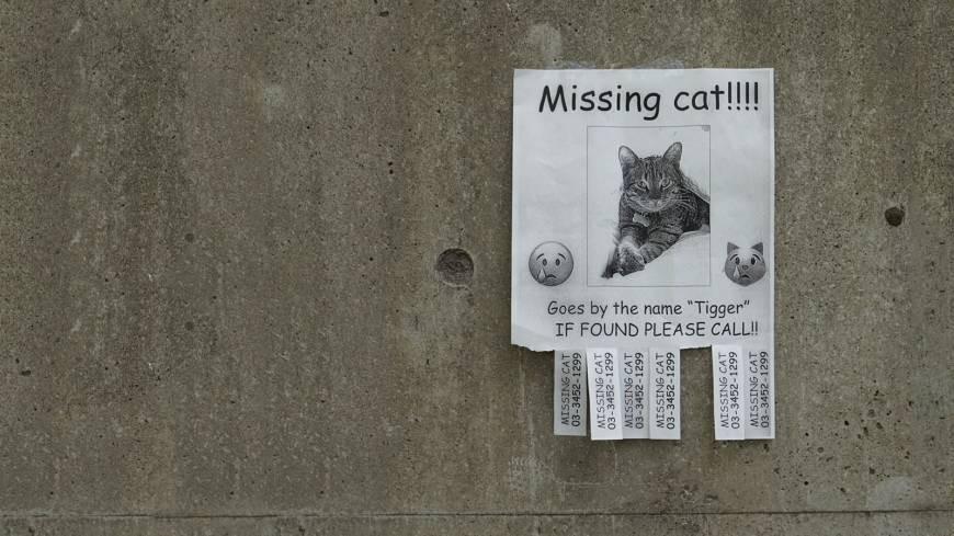 Bỏ cả nghìn đô để tìm mèo đi lạc và câu chuyện về nghề nghiệp đặc biệt chỉ có ở Nhật Bản - Ảnh 5.