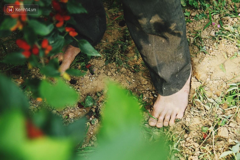 Tháng 4 Hà Nội, mùa dâu tằm chín mọng đã đỏ rực bên bờ sông Đáy - Ảnh 10.