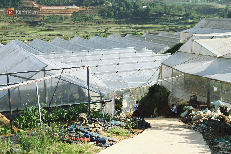 Vườn dâu tây nổi tiếng ở Sapa thu phí tham quan 4 ngày vì sợ không kiểm soát được ý thức du khách dịp lễ - Ảnh 2.