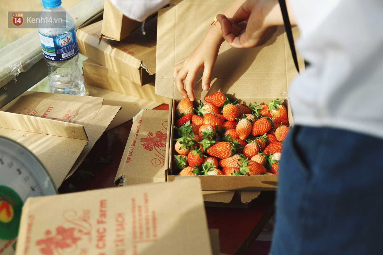 Vườn dâu tây nổi tiếng ở Sapa thu phí tham quan 4 ngày vì sợ không kiểm soát được ý thức du khách dịp lễ - Ảnh 10.