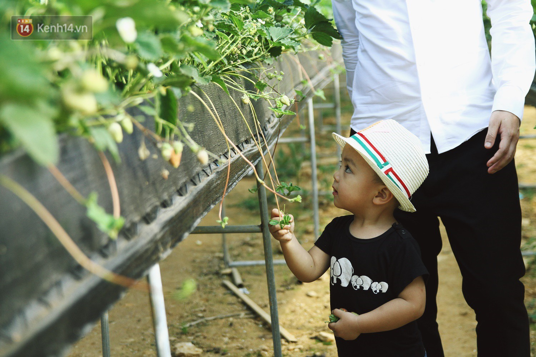 Vườn dâu tây nổi tiếng ở Sapa thu phí tham quan 4 ngày vì sợ không kiểm soát được ý thức du khách dịp lễ - Ảnh 5.
