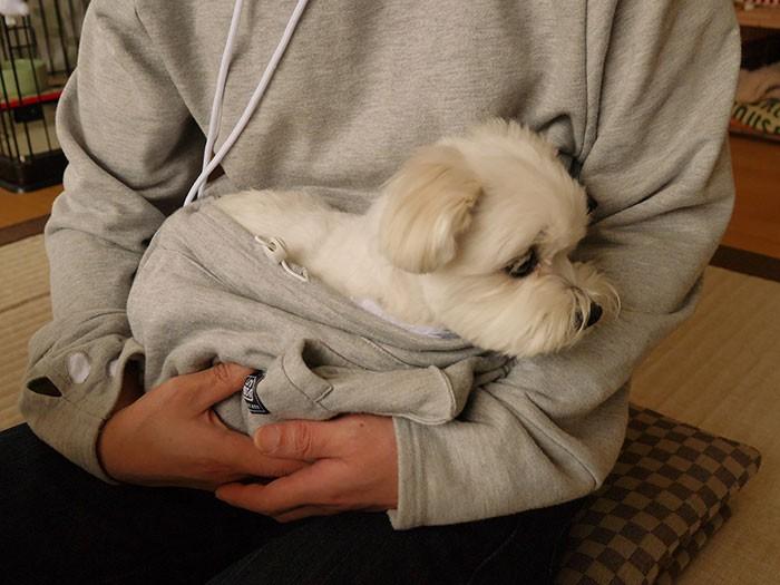Trời lạnh thế này, có boss ngoan ngoãn nằm ở bụng sưởi ấm thì còn gì tuyệt bằng - Ảnh 3.