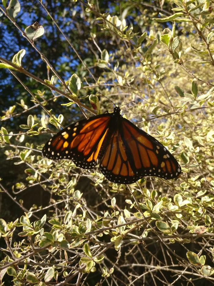 Chú bướm sắp chết vì rách cánh, chỉ với vật dụng có sẵn, người phụ nữ đã làm nên ca phẫu thuật kỳ diệu - Ảnh 5.