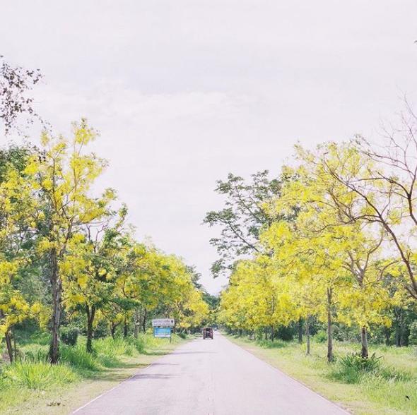 Chẳng phải Bangkok, Chiang Mai mới là điểm đến được giới trẻ Việt ghé thăm nhiều nhất mấy ngày nghỉ lễ - Ảnh 6.