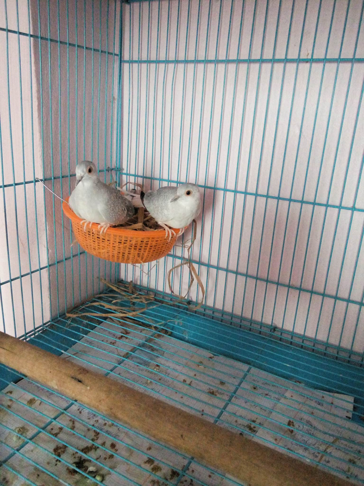 Gặp gỡ thanh niên học cấp 3 mà có nguyên sở thú trong nhà: 2 chân, 4 chân, biết bay biết trườn đủ cả - Ảnh 6.