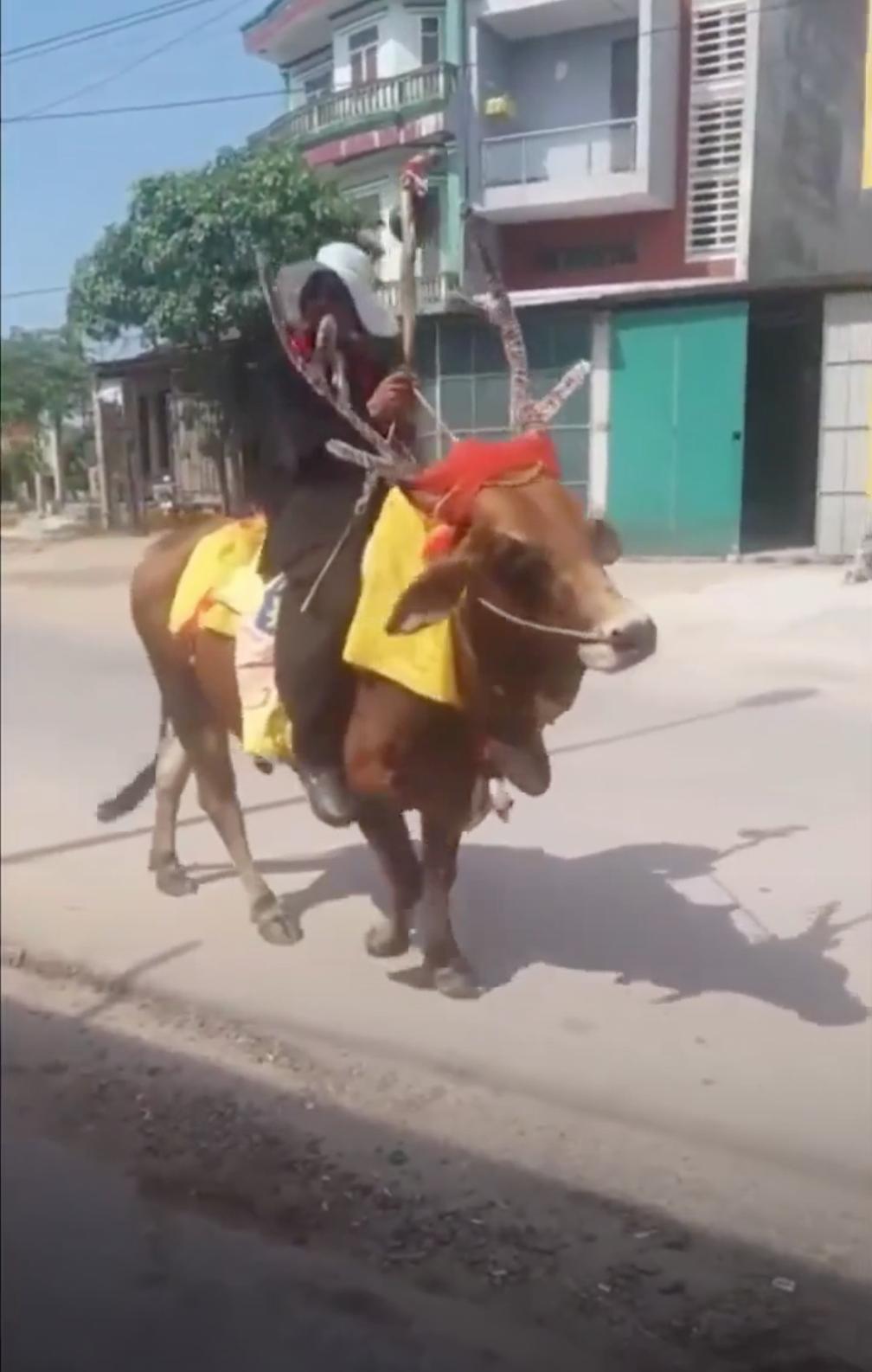 Quảng Trị: Thanh niên độ bò thành tuần lộc rồi ung dung dạo phố - Ảnh 2.