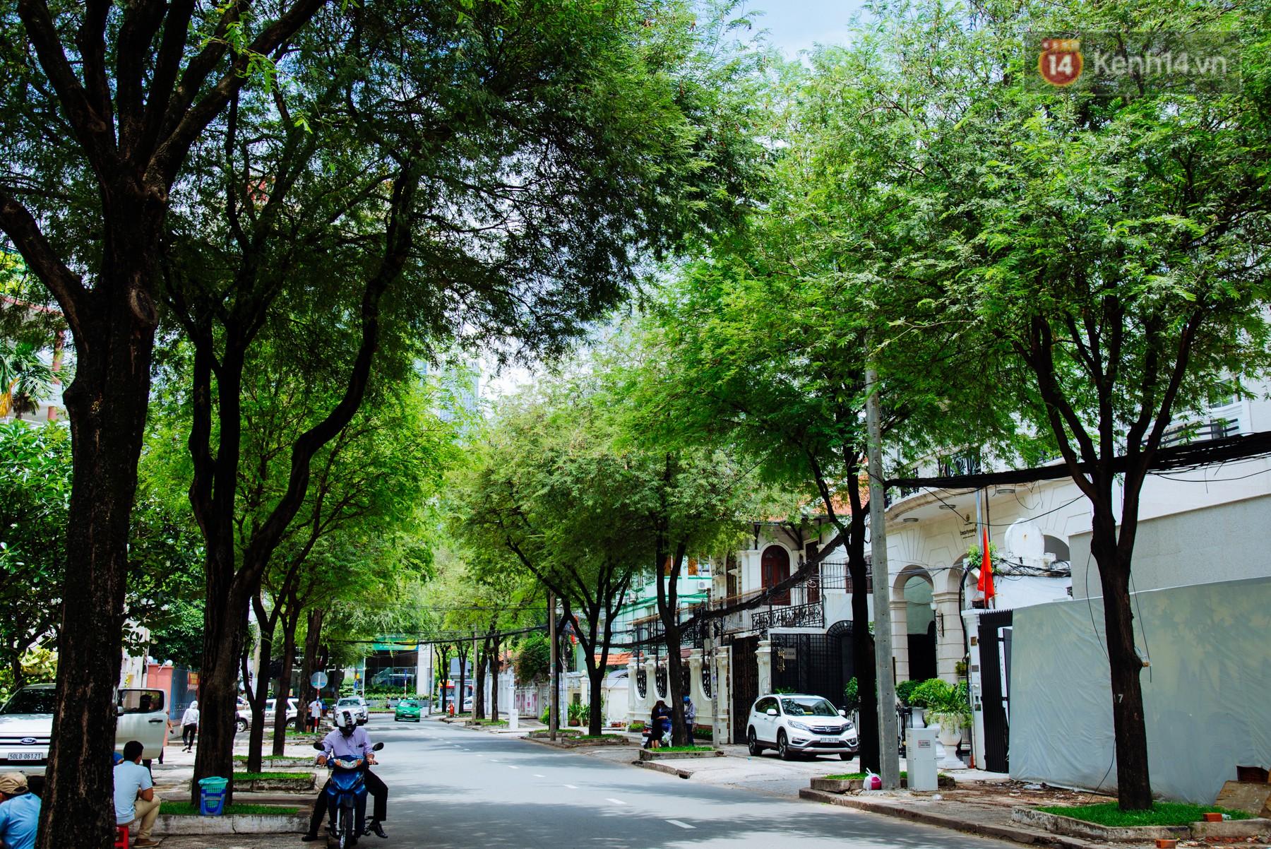 Có một mùa chua chua ngọt ngọt ở Sài Gòn: Mùa lá me bay gợi đầy ký ức - Ảnh 2.