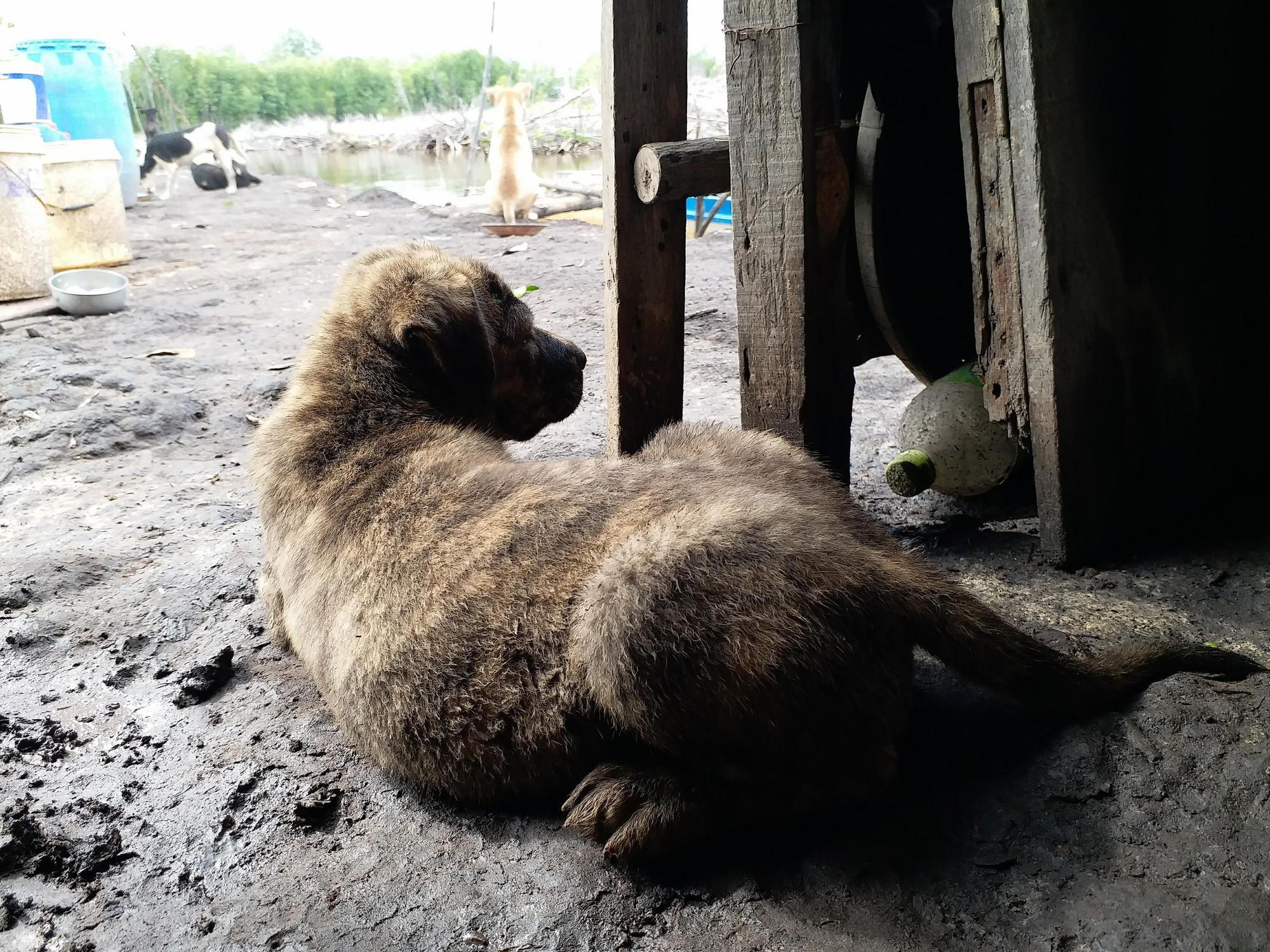 Chuyện boss ngoan: Chú chó nhỏ giữa trưa nắng lặn lội đi kiếm bữa trưa về vì sợ chủ đói - Ảnh 3.