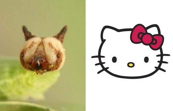 Tin được không, loài sâu này có khuôn mặt... chú mèo Hello Kitty - Ảnh 2.