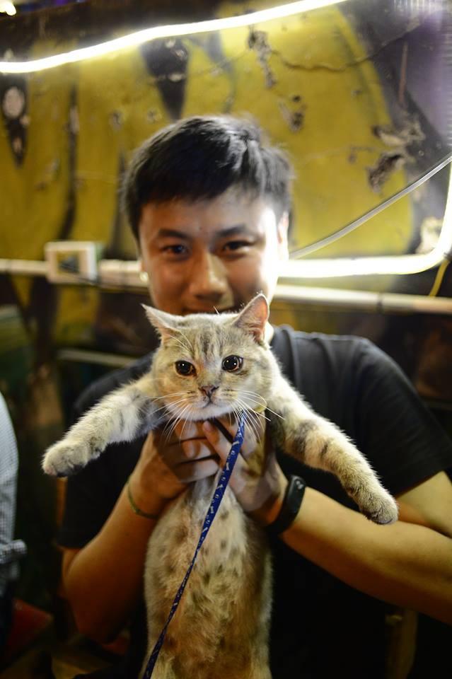 Chú mèo tên Bư nổi tiếng trên MXH bất ngờ qua đời khiến cư dân mạng tiếc nuối - Ảnh 8.