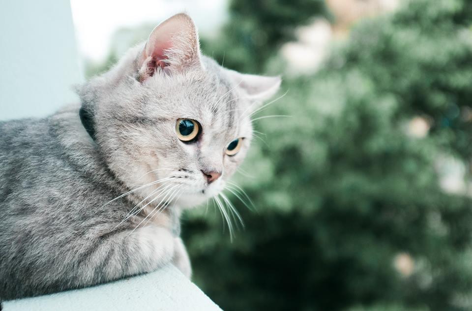 Chú mèo tên Bư nổi tiếng trên MXH bất ngờ qua đời khiến cư dân mạng tiếc nuối - Ảnh 11.
