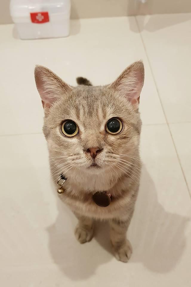 Chú mèo tên Bư nổi tiếng trên MXH bất ngờ qua đời khiến cư dân mạng tiếc nuối - Ảnh 5.