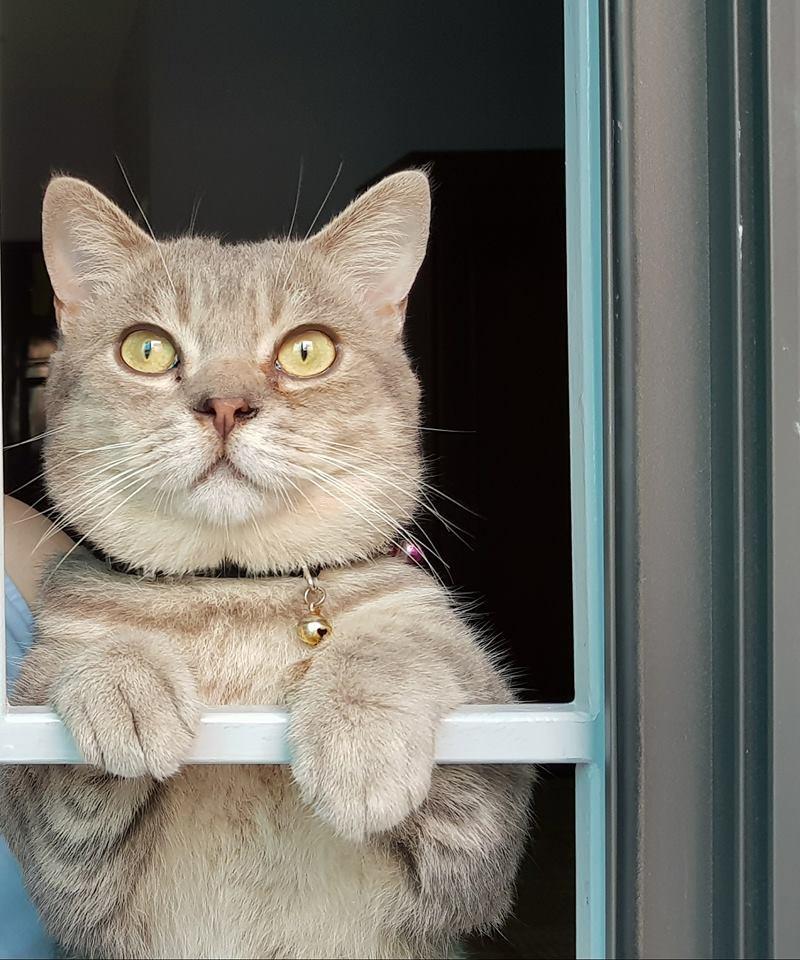 Chú mèo tên Bư nổi tiếng trên MXH bất ngờ qua đời khiến cư dân mạng tiếc nuối - Ảnh 4.