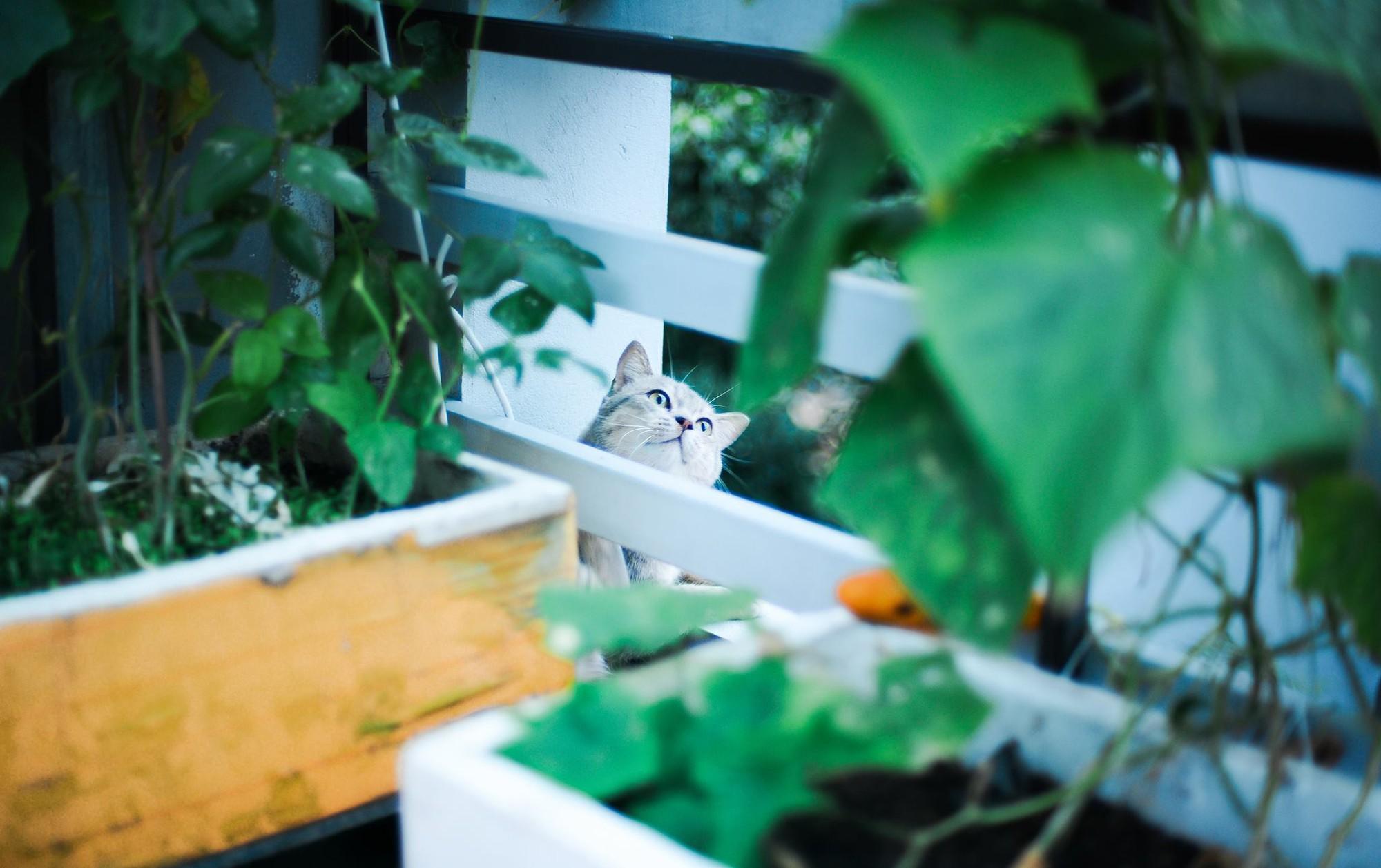 Chú mèo tên Bư nổi tiếng trên MXH bất ngờ qua đời khiến cư dân mạng tiếc nuối - Ảnh 2.