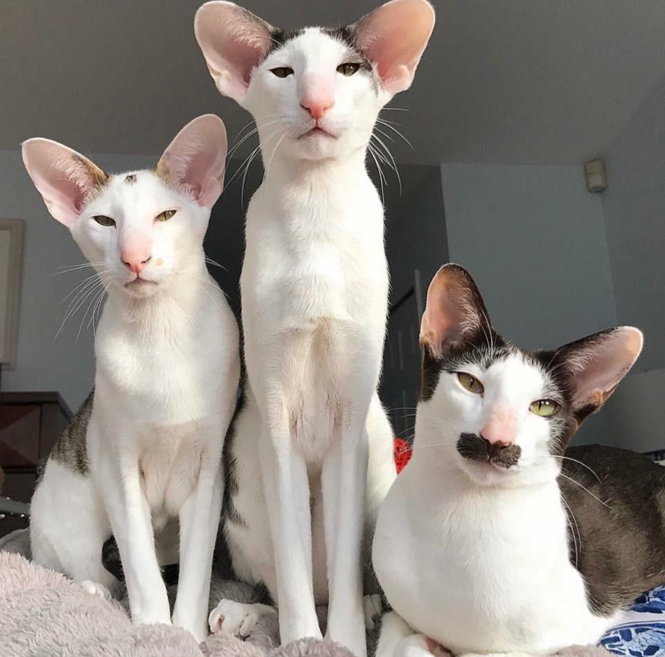 Bộ ảnh gia đình mèo xấu lạ mỗi con một kiểu nhưng đứng cùng nhau lại chất thôi rồi - Ảnh 3.