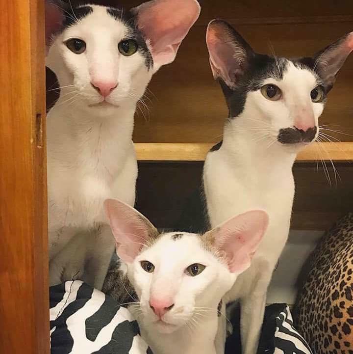 Bộ ảnh gia đình mèo xấu lạ mỗi con một kiểu nhưng đứng cùng nhau lại chất thôi rồi - Ảnh 4.