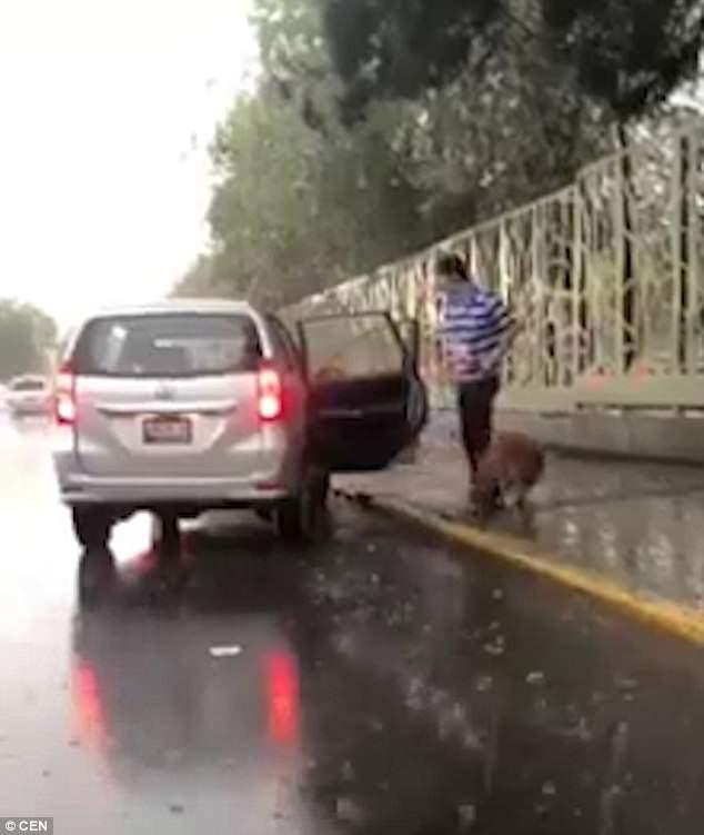 Clip thanh niên dắt chó đi dạo theo phong cách lười chưa từng thấy bị chỉ trích vì ngược đãi động vật - Ảnh 3.