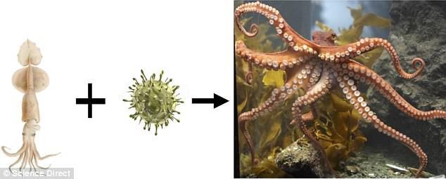 Phát hiện không ngờ về bạch tuộc - đến Trái đất nhờ sao Chổi và là sinh vật ngoài hành tinh? - Ảnh 2.