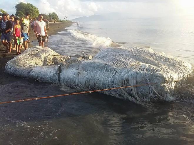 Sinh vật lông lá như đến từ ngoài hành tinh bất ngờ dạt vào bờ biển Philippines - Ảnh 3.