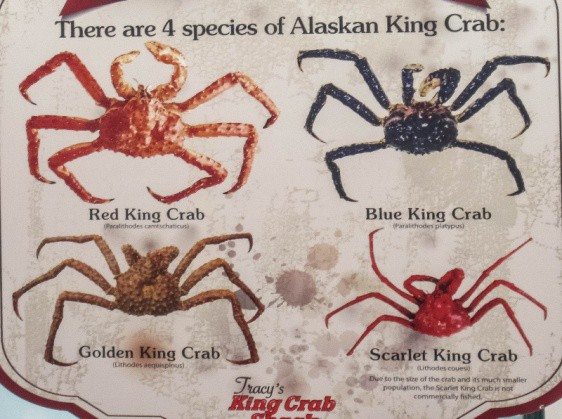 Đây là cuộc đời đầy trái ngang của loài hoàng đế biển Alaska - Ảnh 1.