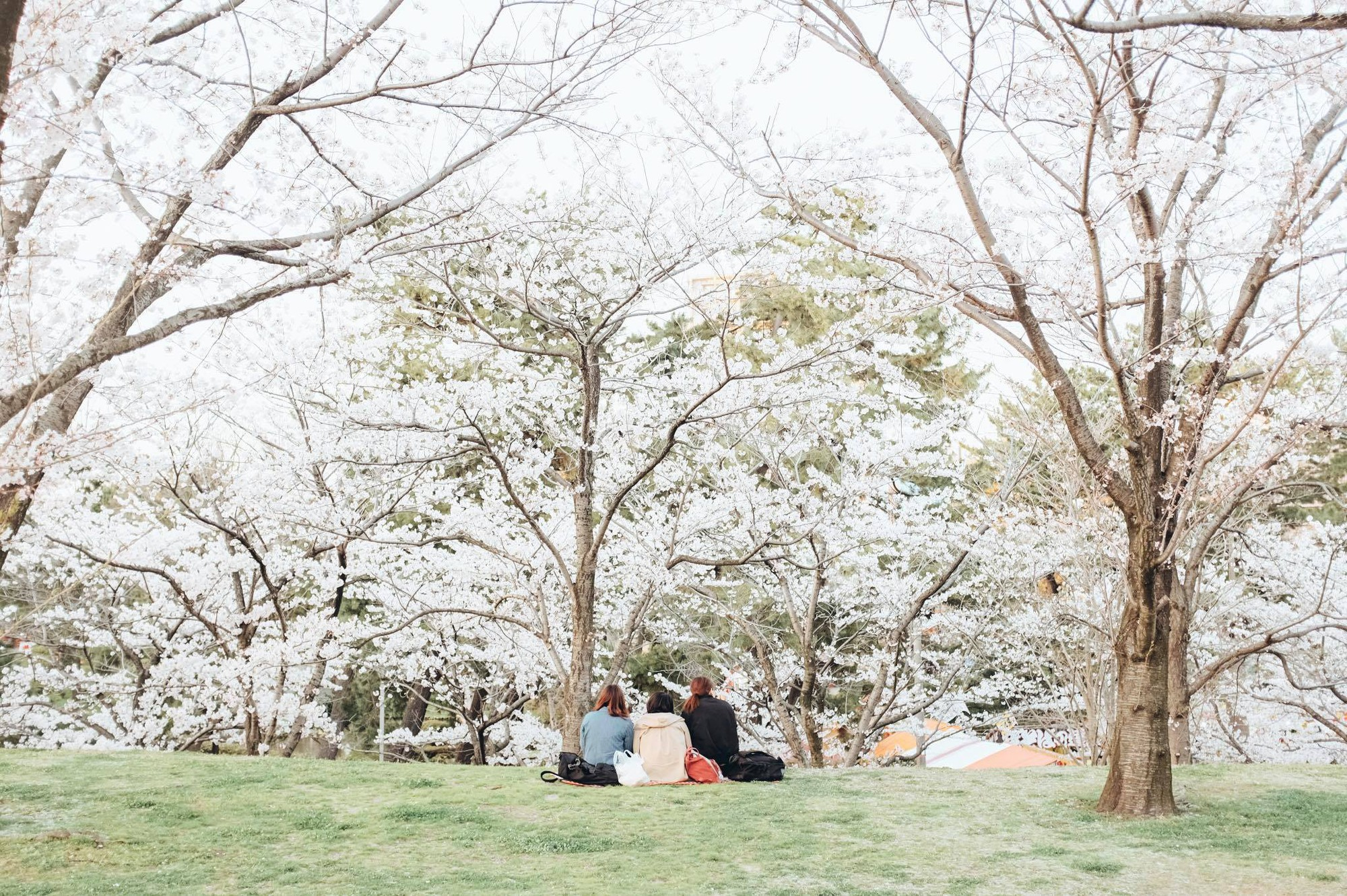 Chẳng ai rời mắt được những bức hình chụp Nhật Bản rất bình yên và trong trẻo của chàng trai Việt Nam này - Ảnh 23.
