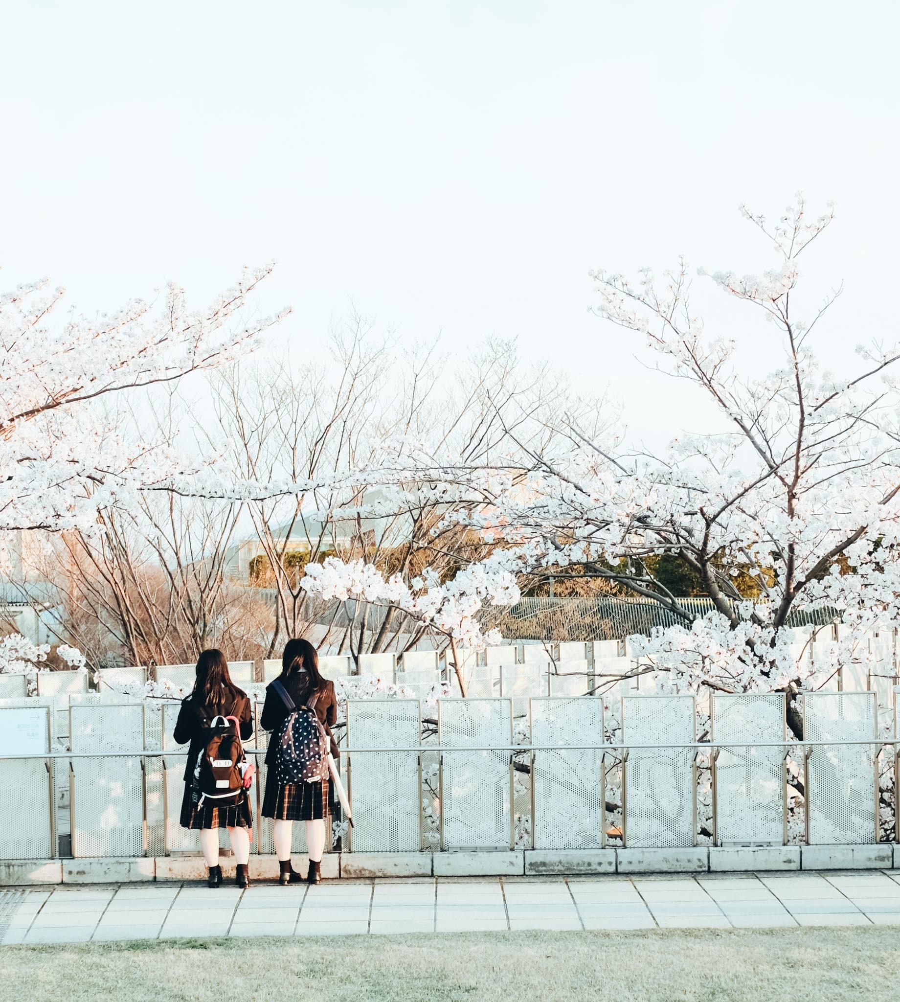 Chẳng ai rời mắt được những bức hình chụp Nhật Bản rất bình yên và trong trẻo của chàng trai Việt Nam này - Ảnh 8.