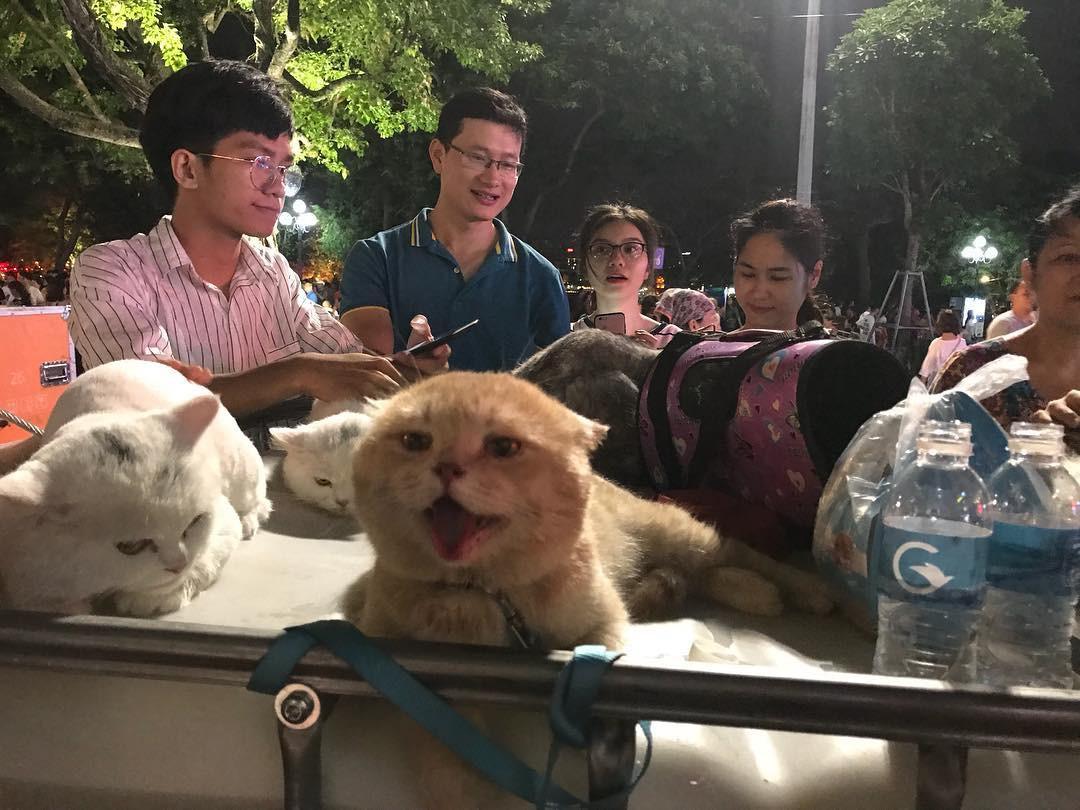 Bị ném đá là ngược đãi thú cưng, chủ nhân của chú mèo tên Chó nổi nhất MXH nói gì? - Ảnh 2.