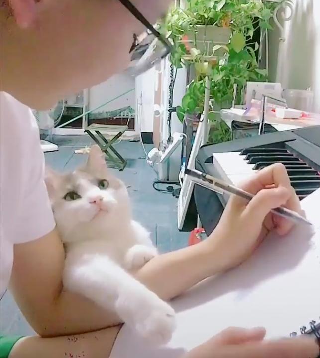 Bộ mặt chơi với em đi của boss mèo khiến cư dân mạng muốn dừng mọi việc lại mà vuốt ve ôm ấp - Ảnh 2.