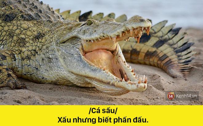 Khi động vật mới là bậc thầy thả thính: /Báo/ Yêu không khách sáo - Ảnh 2.