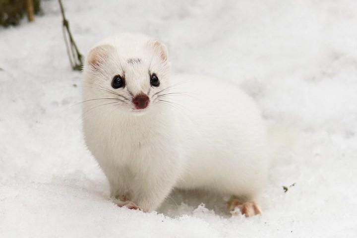 Những bức ảnh động vật đẹp mê hồn trên khắp thế giới - Ảnh 12.