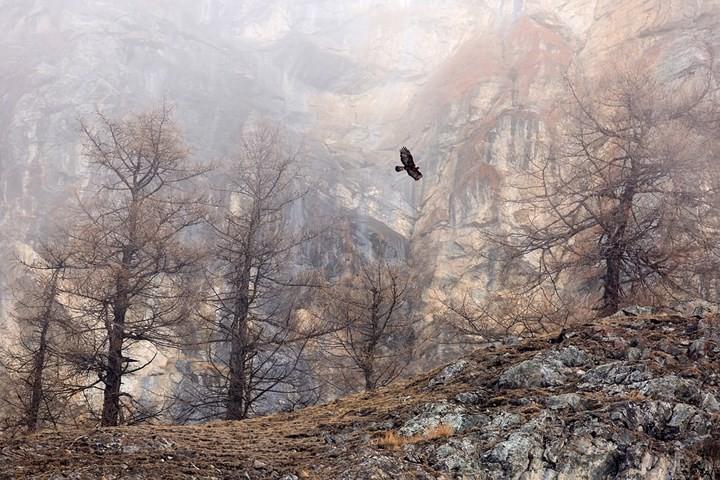 Những bức ảnh động vật đẹp mê hồn trên khắp thế giới - Ảnh 13.
