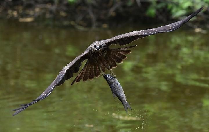 Những bức ảnh động vật đẹp mê hồn trên khắp thế giới - Ảnh 15.