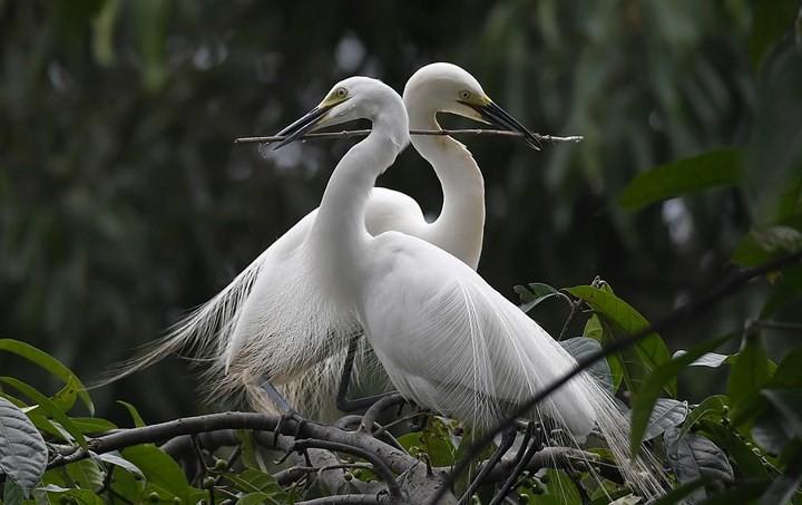 Những bức ảnh động vật đẹp mê hồn trên khắp thế giới - Ảnh 17.