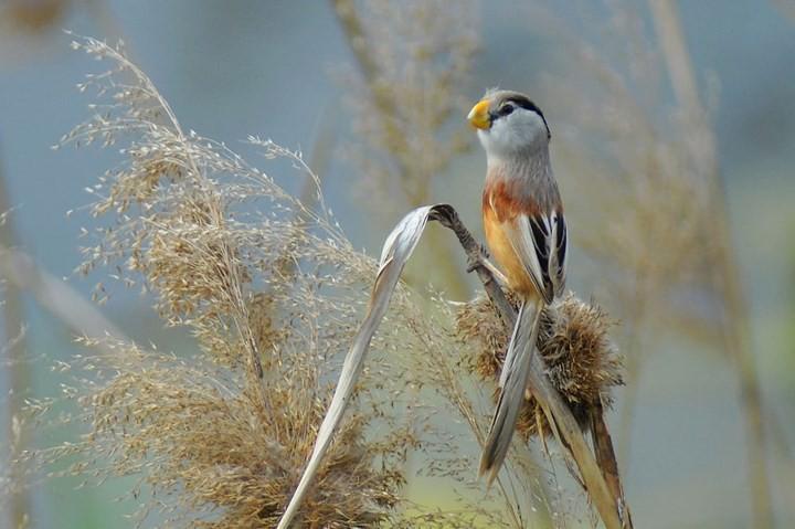 Những bức ảnh động vật đẹp mê hồn trên khắp thế giới - Ảnh 8.