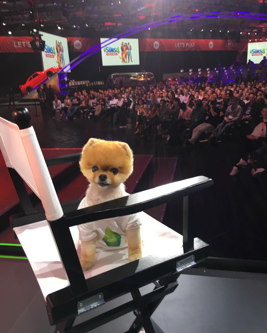Đọ sức nóng với Hot dog 8 triệu follower Instagram: Được dự event của Mark Zuckerberg, đóng MV cho Katy Perry... - Ảnh 6.