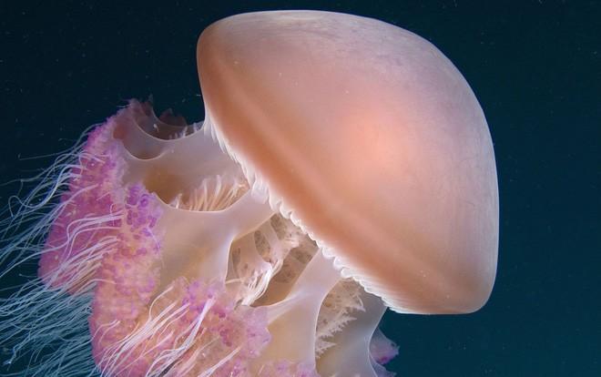 Nằm lòng cách xử lý khi bị sứa biển cắn – Bí quyết xử lý đúng, kịp thời bất cứ ai cũng cần trau dồi vào mùa đi biển - Ảnh 2.