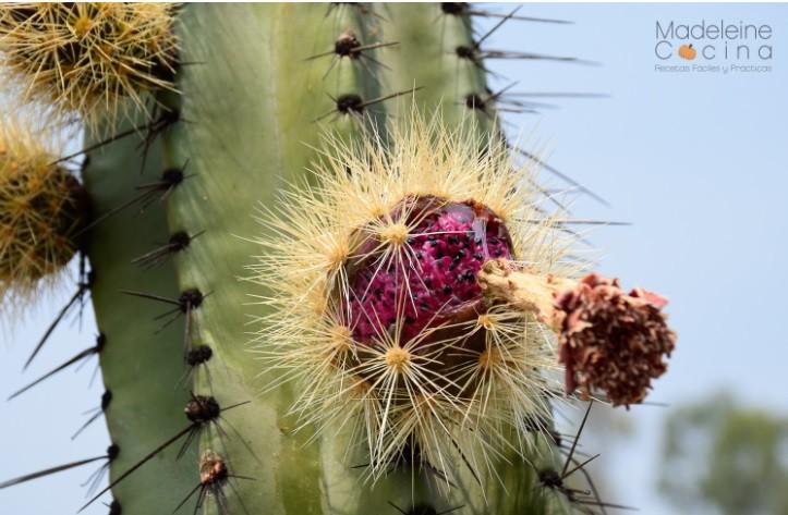 Tròn xoe mắt kinh ngạc với loại thanh long 7 sắc cầu vồng ở Mexico - Ảnh 3.