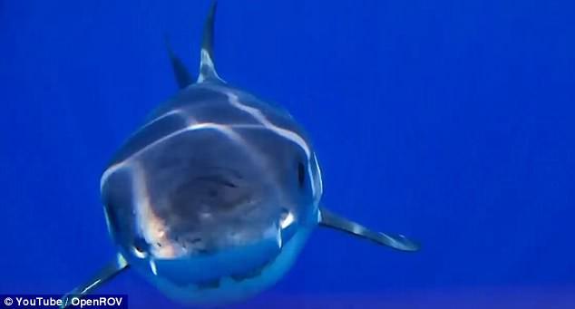 Drone đang livestream thì bị cá mập khổng lồ ngoạm, thám hiểm luôn cận cảnh trong mồm cá - Ảnh 2.