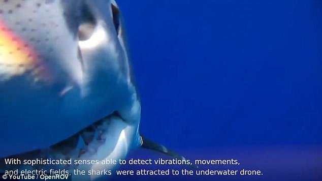 Drone đang livestream thì bị cá mập khổng lồ ngoạm, thám hiểm luôn cận cảnh trong mồm cá - Ảnh 3.