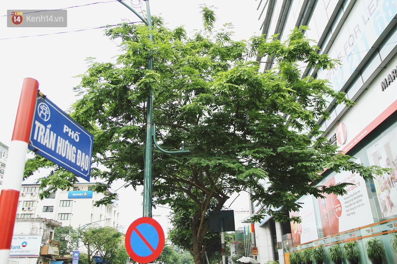 Người Hà Nội tiếc nuối hàng cây sưa quý hiếm chuẩn bị di dời để xây ga ngầm - Ảnh 4.