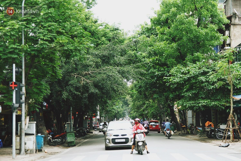 Người Hà Nội tiếc nuối hàng cây sưa quý hiếm chuẩn bị di dời để xây ga ngầm - Ảnh 2.